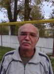 archi, 55  , Kanevskaya