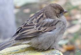 Glafira, 85 - Птичий двор