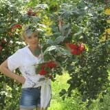larisa, 56  , Vitebsk