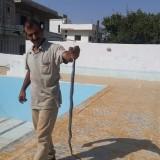 علي, 45  , Homs