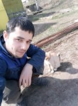 bobochon saidov, 18  , Shcherbinka