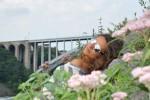 Ксения, 30 - Just Me Ниагара, Нью Йорк