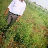 Vishwanath, 34  , Dhule