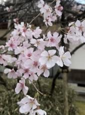 なかた, 33, Japan, Toyama-shi