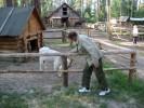 alexandr, 67 - Just Me Два упрямых...На конном дворе.июнь2012