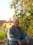 محمد فهمي, 70  , Shibin al Kawm
