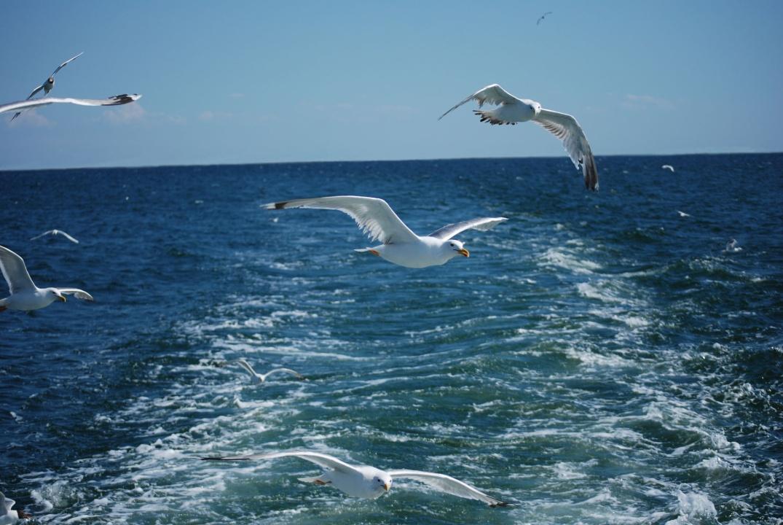 Своими руками, картинки с чайками и морями и реками