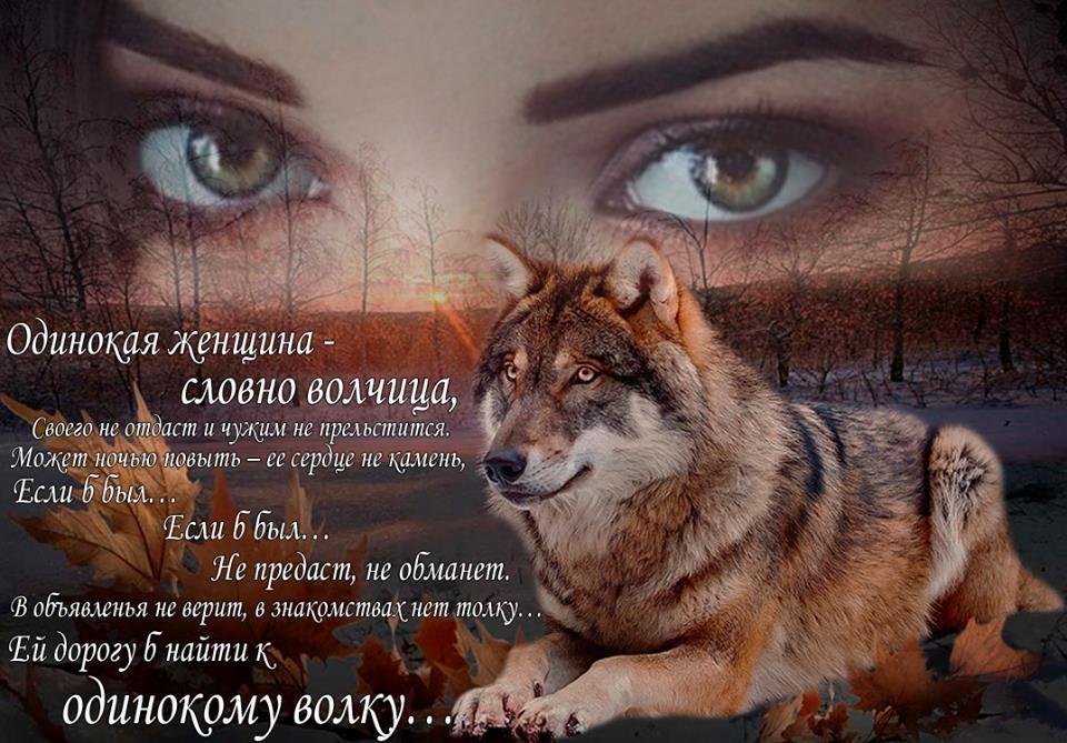 Акварелью, красивые открытки с волками с цитатами