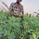 Yassin Alhadi, 25  , Omdurman