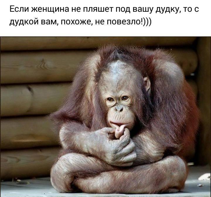 Картинка с обезьяной с надписями, аппликация ромашками