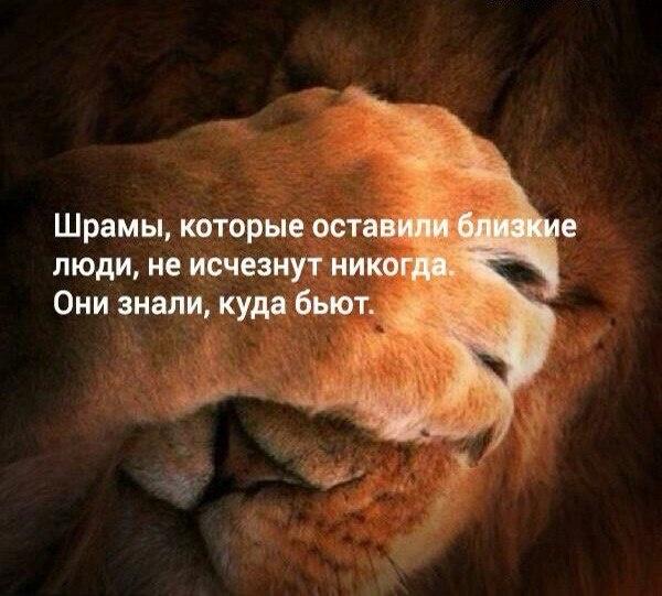если львы обижаются то чел нравится открытка пища мягкая