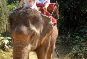 natalya, 63 - Тайланд25 янв-7февр 2011г