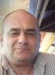 Ovi, 50  , Timisoara