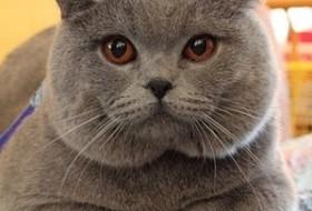 Кошечка, 31 - Разное