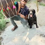 राजू, 29  , Mandi