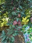 ульяна, 61 год, Горячий Ключ