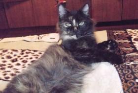 Natalya, 72 - Кошка Торпеда