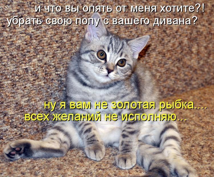 Смотреть прикольные картинки про животных с надписями, почтовая