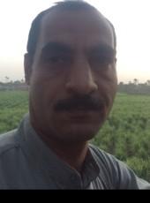 اسد, 35, Egypt, Qina